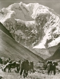 One of the most imposing mountains in Peru is Nevado Salcantay (6271m), whose south face shows in this greeting postcard mailed to friends and supporters by the 1974 German Naturfrfrende expedition.
