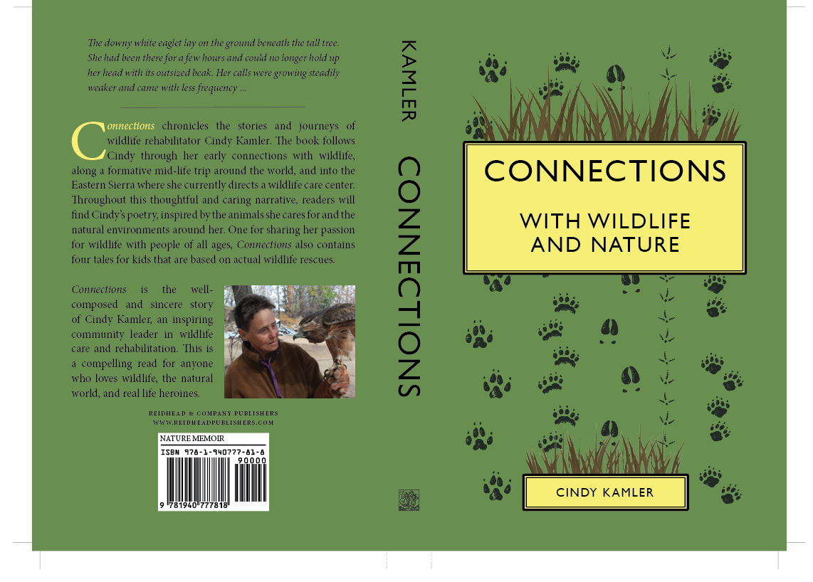 Book Cover for Connections